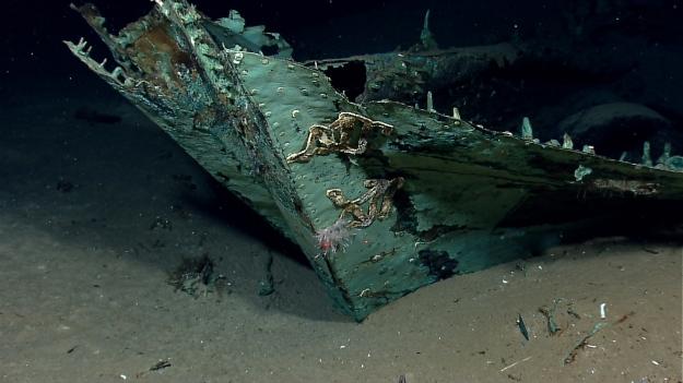 deep sea 12