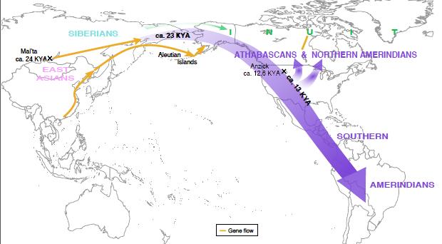 Americas-genetic-migration